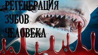 АКУЛЫ   РЕГЕНЕРАЦИЯ ЗУБОВ У ЧЕЛОВЕКА / УЧЕНЫЕ ДОКАЗАЛИ !!!