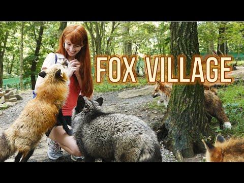 Fox Village in Zao Japan!  蔵王きつね村・kitsune mura