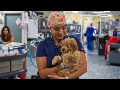 Veterinary Technician Is One Of The Fastest Growing Jobs In 2019