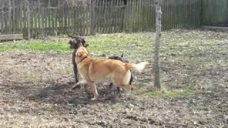 Emma, Sanford And Dorsey Playing And Running Around