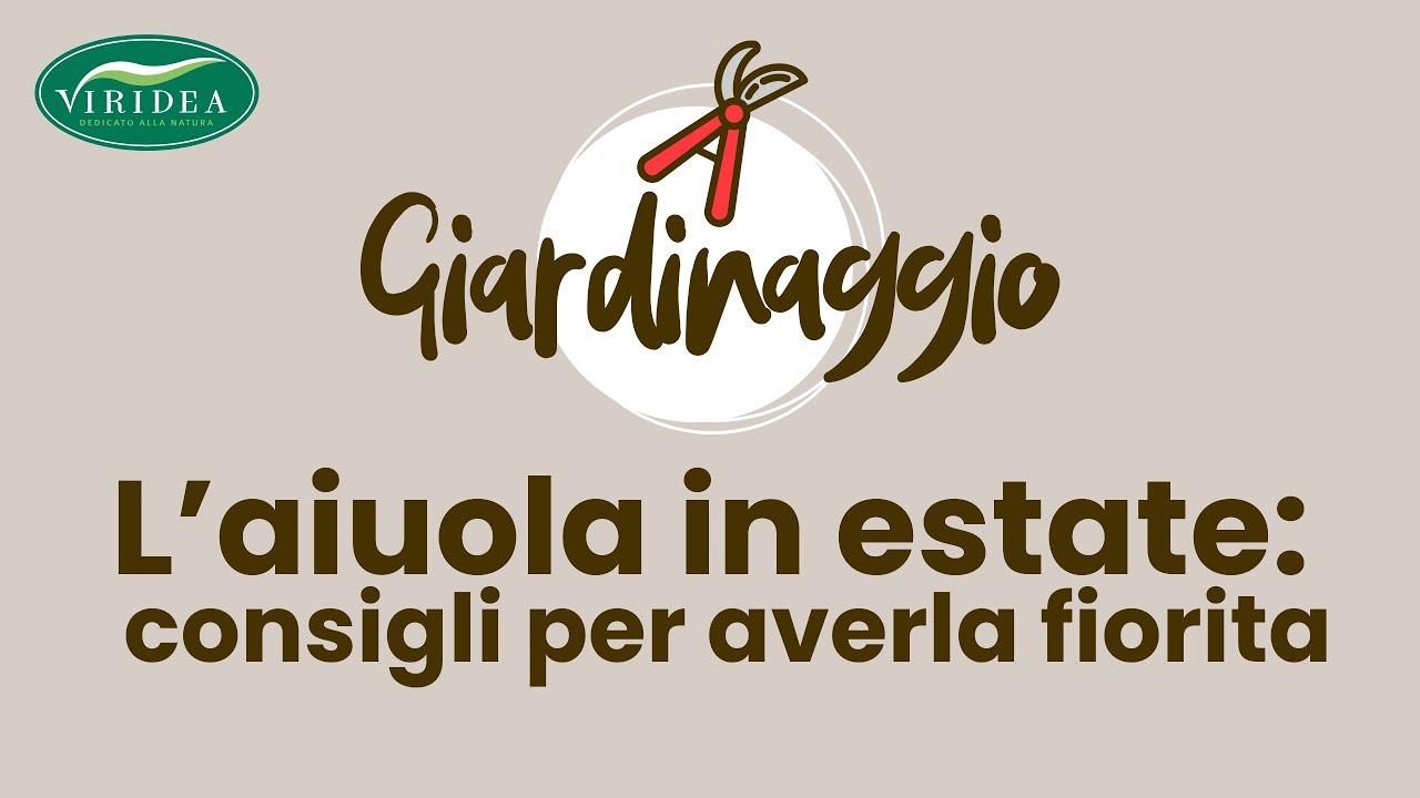 Fiori Tappezzanti Per Aiuole un aiuola fiorita in estate