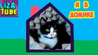 Коты в домиках от лабиринта 🐱🏰🐱 Не хотят выходить 😂 Лиза и котики 🌸 Lizatube