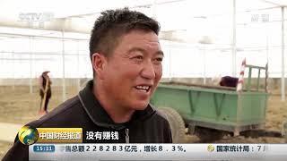 [中国财经报道]西藏江孜:发展藏红花产业 助力脱贫  CCTV财经