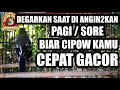 Angin Anginkan Dengarkan Biar Cipow Sirtu Cepat Gacor  Mp3 - Mp4 Download