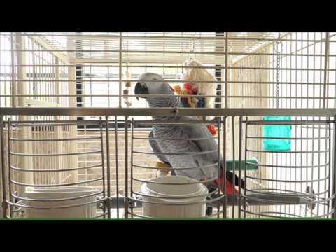 2014/04/21 胡言亂語 - YouTube