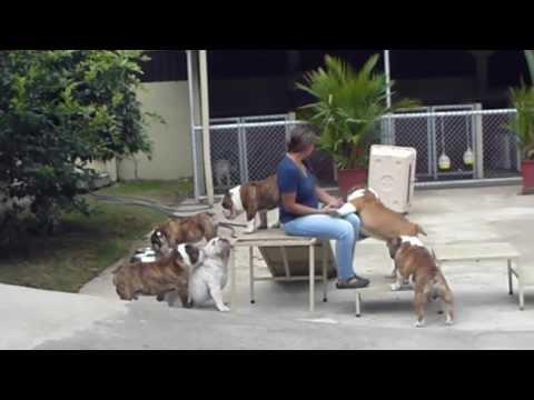 Big Papi Bulldogs - Algunos de los chicos en su hora de juego 2