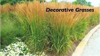Be Water Smart - Gardening Tips