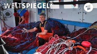 Italien: Die Plastikfischer von Apulien | Weltspiegel