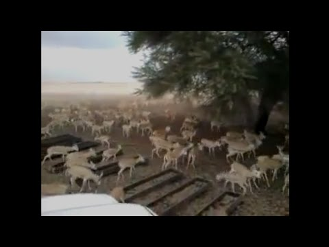 Deer farming in pakistan