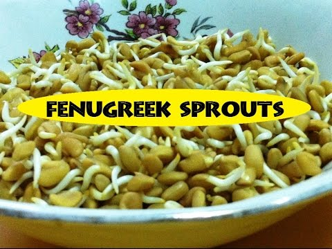 How to grow or make Fenugreek Sprouts and its benefits / How to sprout Fenugreek