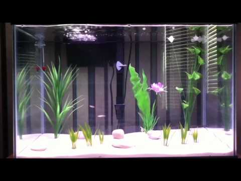 50 Gallon Freshwater White Sand Aquarium With Live Plants | How To