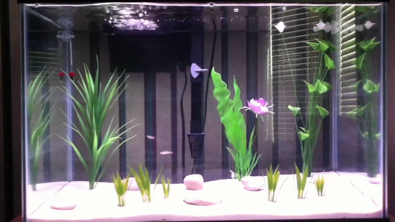 20 Gallon Tall Freshwater Sand Aquarium   YouTube