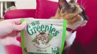 【猫】カリカリを噛み砕く顔が可愛いトラさん。素晴らしきカリカリ音