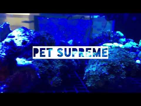 Pet Supreme Tropical Fish