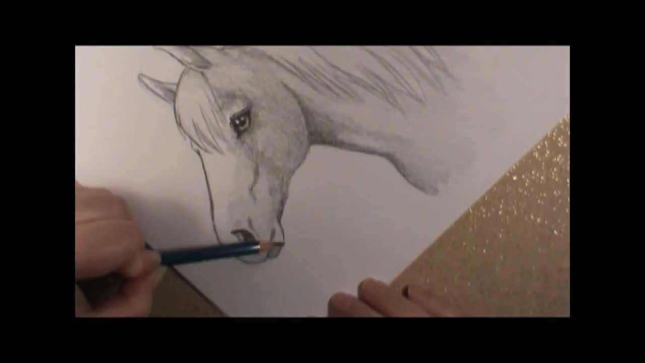 How To Draw A Horse Head Youtube
