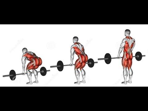 Cara Singkat Latihan Deadlift Untuk Pemula Dan Manfaatnya Dalam Meningkatkan Massa Otot Lebih Cepat
