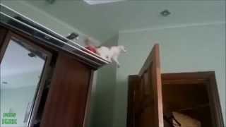 Классные приколы с котами и кошками - подборка видео