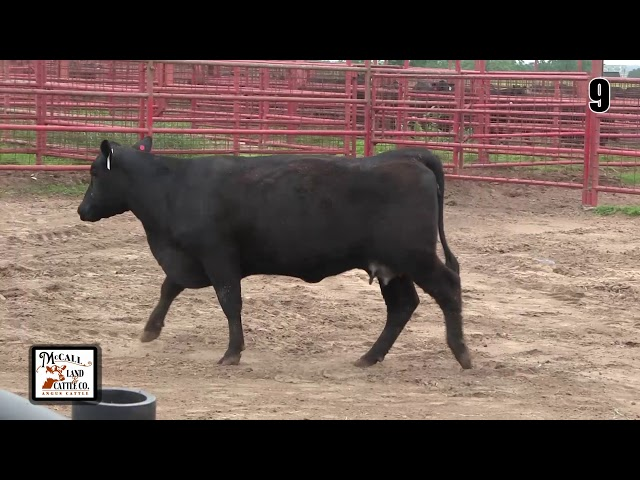 McCall Land and Cattle Lot 9