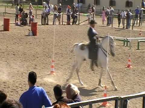 Ubrique - Style Section - European Working Equitation Championships - Sardinia 2008