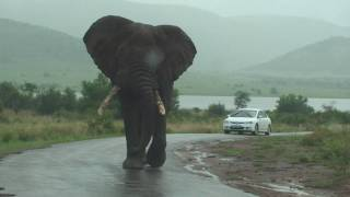 Big Big Big Elephant Walks By Our Car on Safari