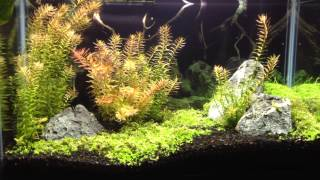 10g planted tank update 6