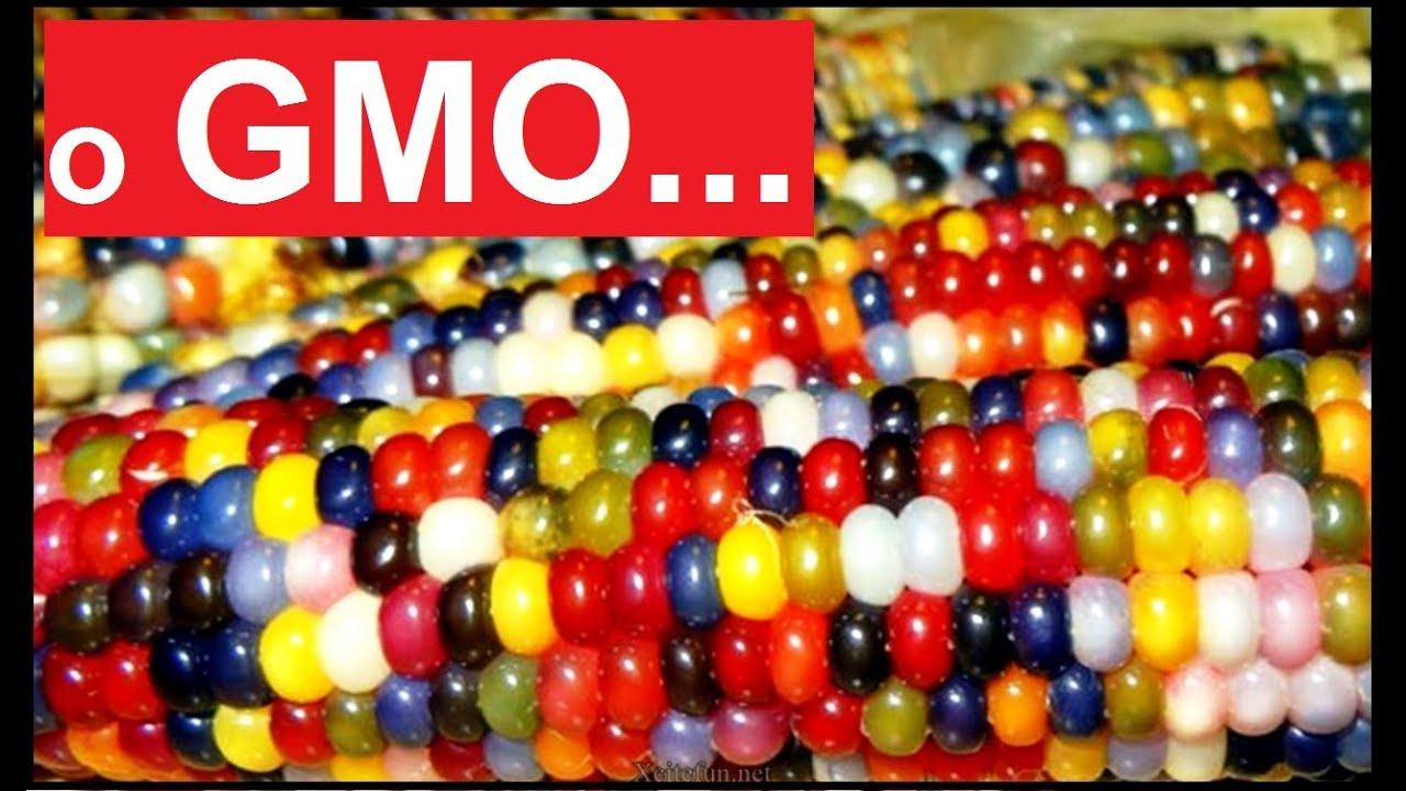 Trzy słowa o GMO - Nauka. To lubię.