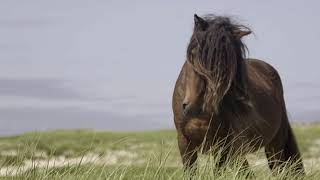 Discover Sable Island National Park Reserve