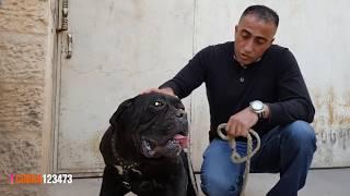 10 انواع من افضل واشرس الكلاب الجزء (1) مع جمال العمواسي
