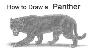 How to Draw a Black Panther