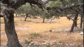 buffalo hunt than buffalo chase