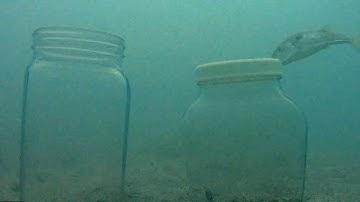 수심 10m 갯지렁이들 어떤 반응 실험 Reaction experiment of 10m deep waterworm