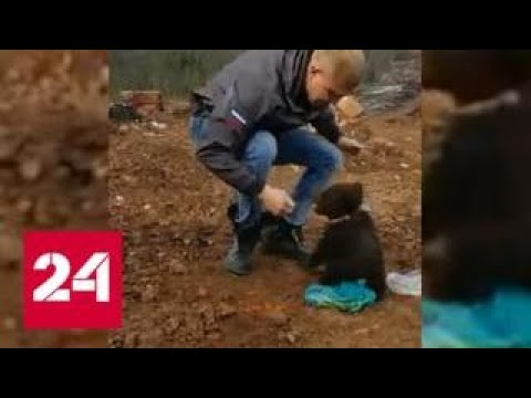 Голодный медвежонок отобрал пакет с едой у жителя Сахалина - Россия 24