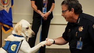 كلب أمريكي يؤدي اليمين الدستورية للشرطة!