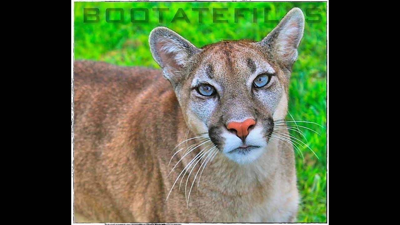 Animal Planet Presenta: Ecuador