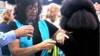 Diane Betelak Grooming A Poodle's Feet