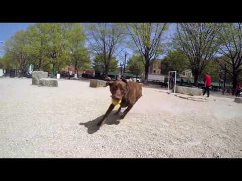 Pinterest DIY Dog Park