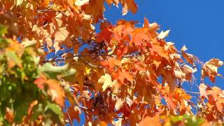 Panasonic FZ200, Fall Colors, Parc Mont-Royal, Montréal, 2 October 2013 (4)