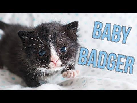 Update: Badger, the Hot Mess Kitten!