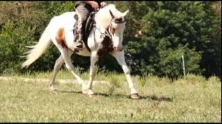 EL Chay Farms Movie 4