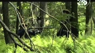 Война создавшая Америку 1-й фильм: Спорная земля