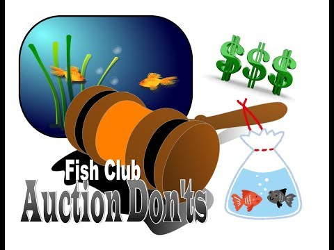Tropical Fish Club Auctions- The Do's And Don'ts