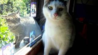Scary cats - funny talking cat crying like a baby