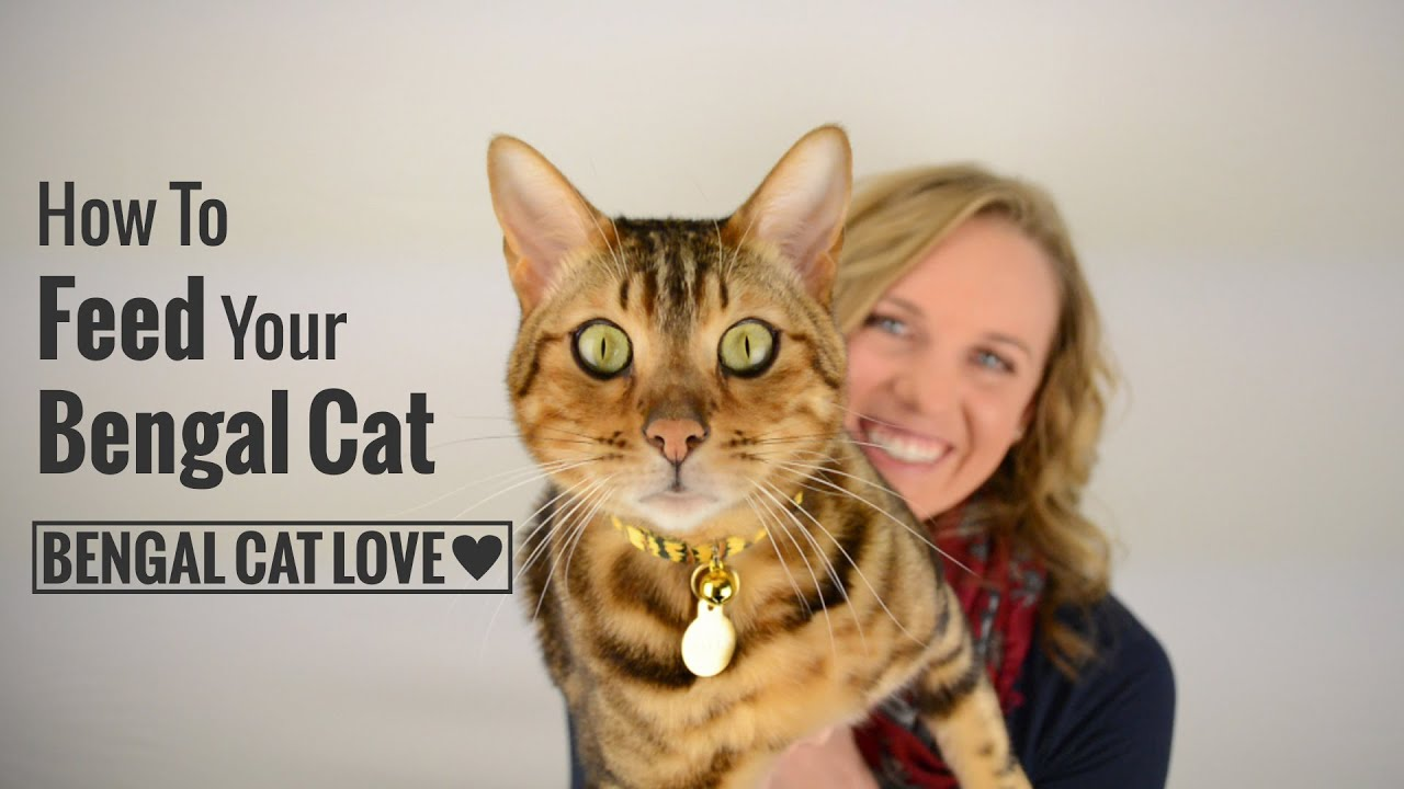 How to Feed Your Bengal Cat (Covering Raw Diet, Prey Model Raw ...
