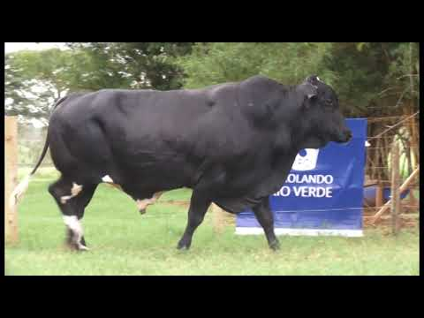 LOTE 209 RC FANTÁSTICO MERIDIAN