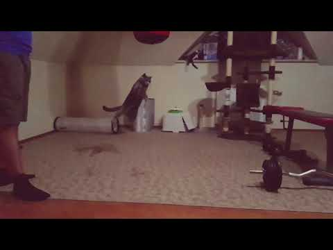 Cats jumping in slowmotion