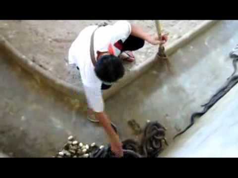 Video  Nghề nguy hiểm nhất thế giới   Phi thường   kỳ quặc