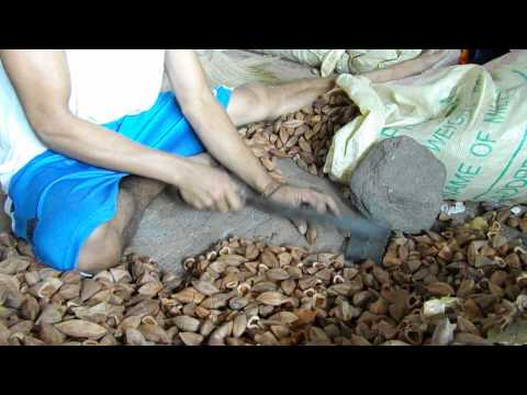 Processing the Pili Nut from shell
