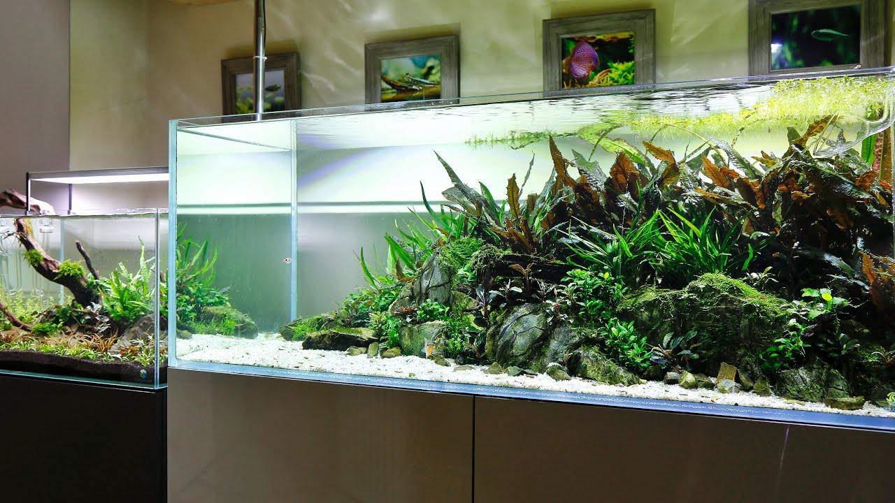 Aquascape Gallery Update - 2 weeks in the USA! - YouTube