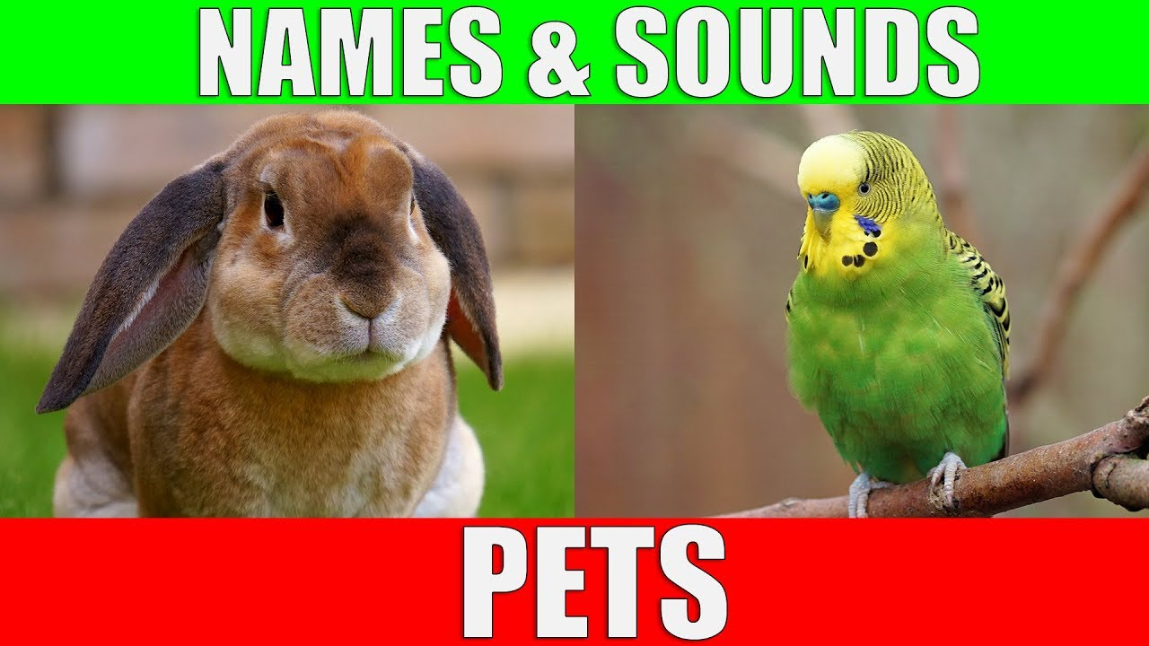 Learn Names of Pets for Kids - Pet Animal Names and Sounds for Children, Kindergarten and Preschool