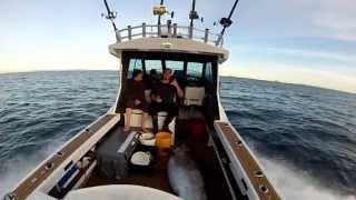 Daytime Swordfish - White island New Zealand.